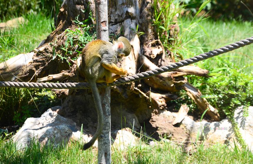Faruk Yalçın Hayvanat Bahçesi - İskelet Kafalı Maymunlar