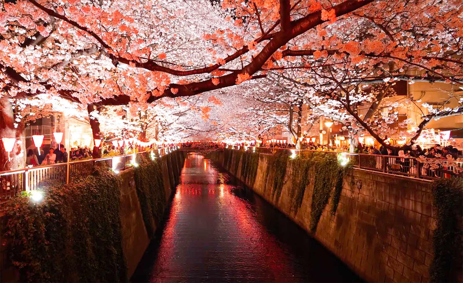 Japonya Sakura Festivali